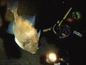 076 Gr.Mitigliano P.Balestra M copia.jpg