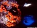 Palinuro Grotta Azzurra.jpg
