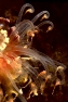 Alicia tentacoli M.jpg