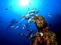 056 mad pesci.jpg