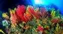17 Paramuricea bicolore Scilla  2 M.jpg