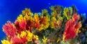18 Paramuricea bicolore Scilla  1 M.jpg